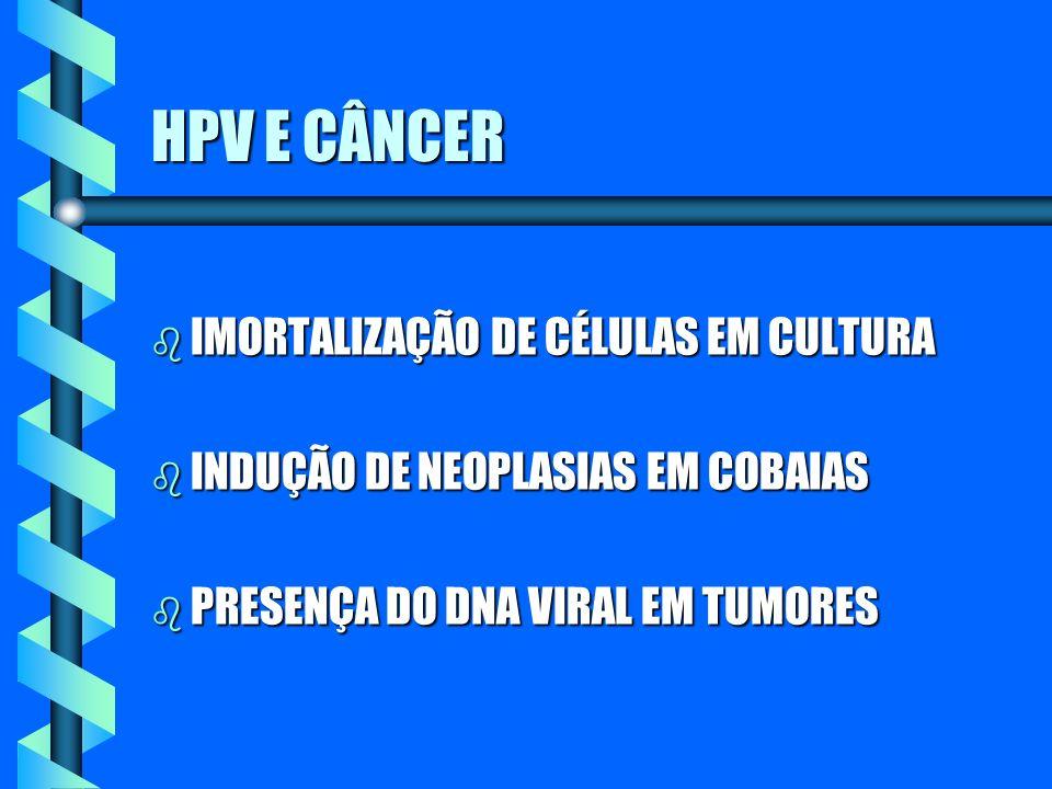HPV E CÂNCER b IMORTALIZAÇÃO DE CÉLULAS EM CULTURA b INDUÇÃO DE NEOPLASIAS EM COBAIAS b PRESENÇA DO DNA VIRAL EM TUMORES