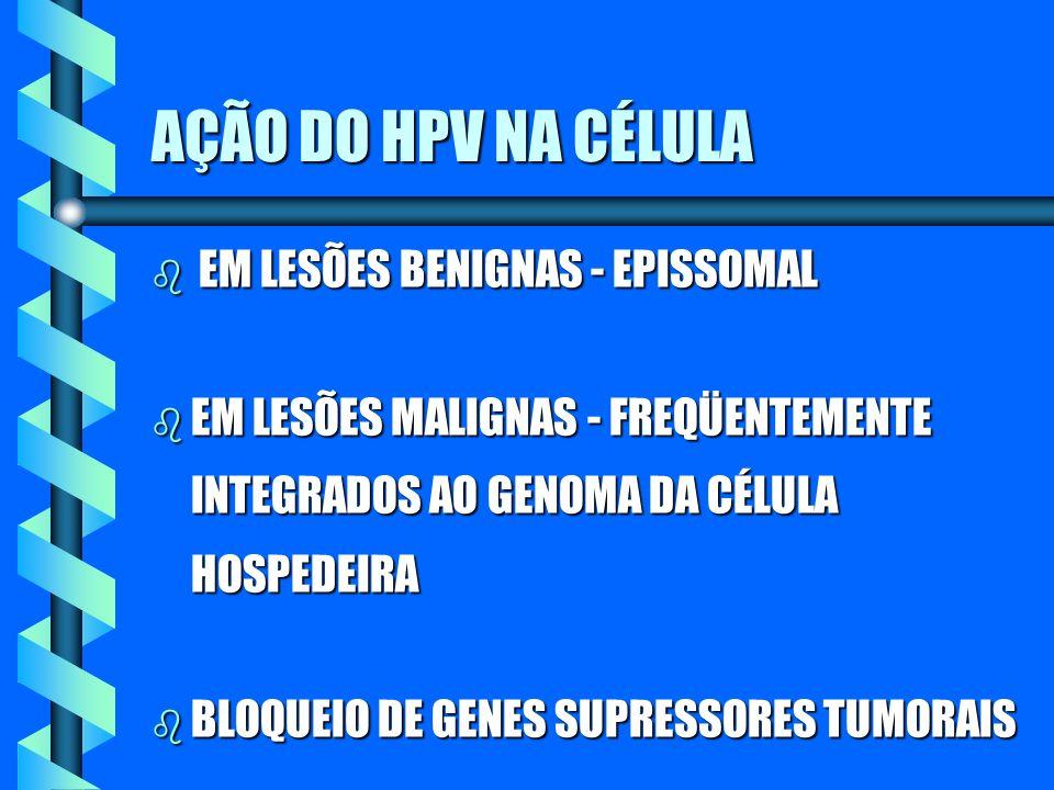 AÇÃO DO HPV NA CÉLULA b EM LESÕES BENIGNAS - EPISSOMAL b EM LESÕES MALIGNAS - FREQÜENTEMENTE INTEGRADOS AO GENOMA DA CÉLULA HOSPEDEIRA b BLOQUEIO DE G