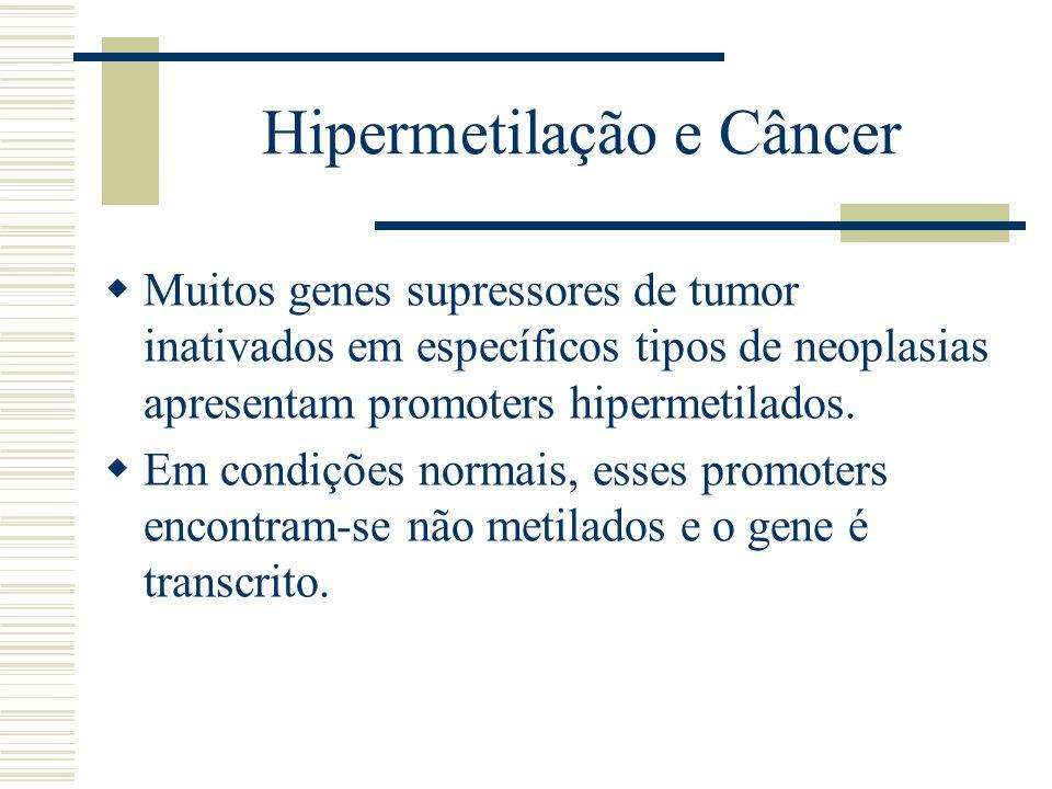 Hipermetilação e Câncer Muitos genes supressores de tumor inativados em específicos tipos de neoplasias apresentam promoters hipermetilados. Em condiç