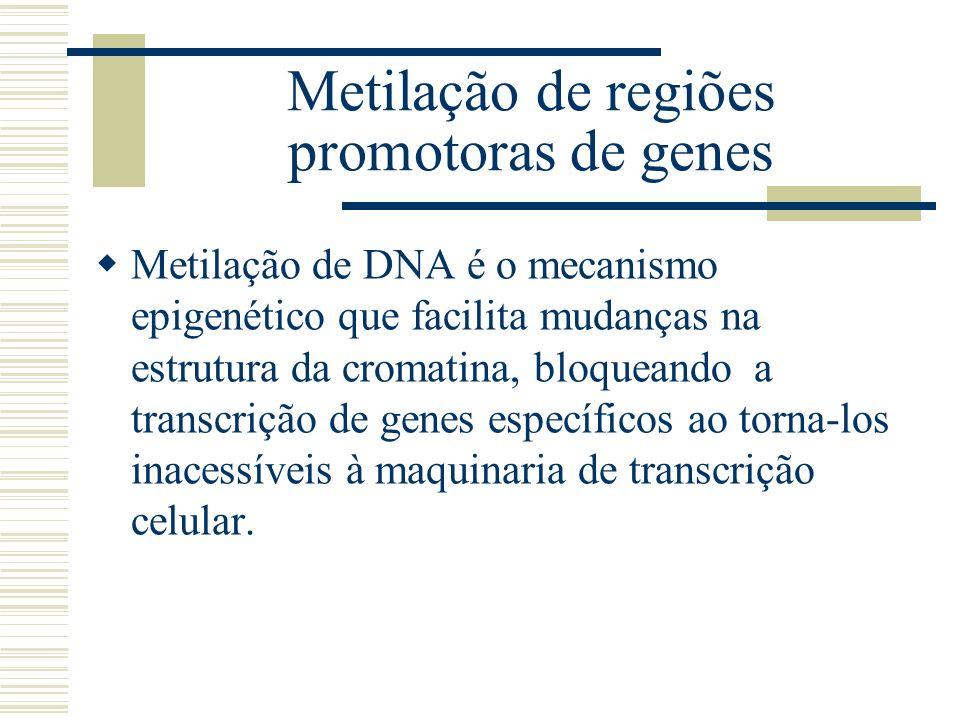Metilação de DNA é o mecanismo epigenético que facilita mudanças na estrutura da cromatina, bloqueando a transcrição de genes específicos ao torna-los