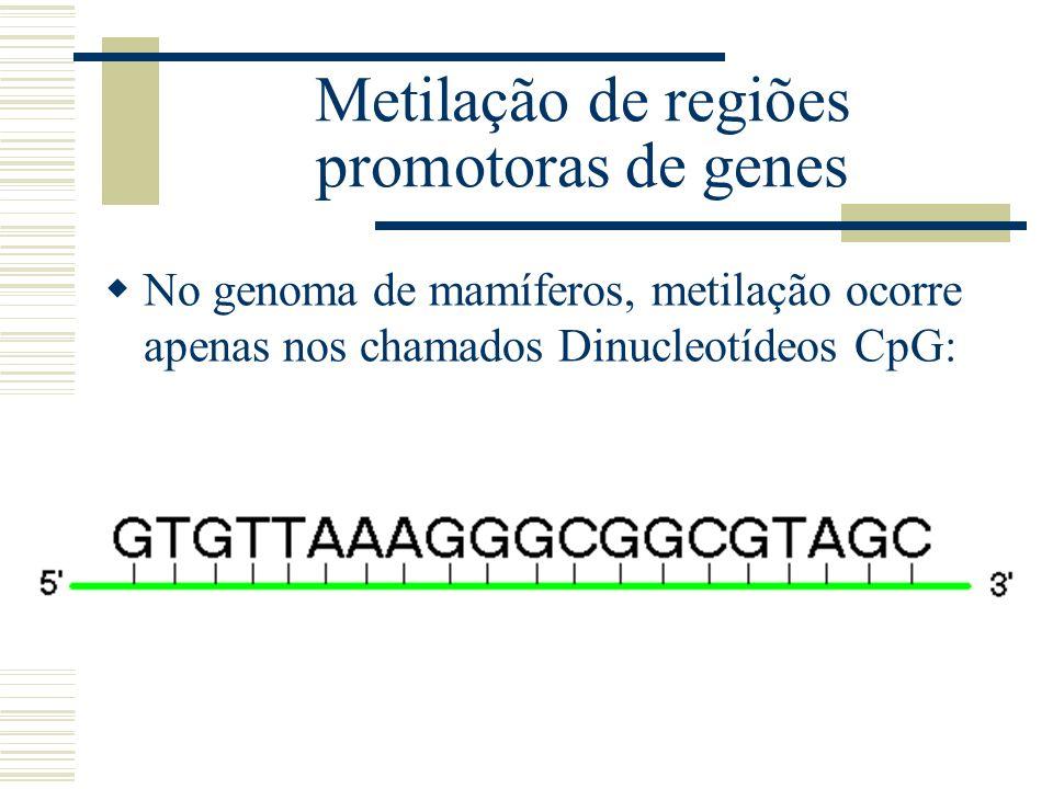 Metilação de regiões promotoras de genes No genoma de mamíferos, metilação ocorre apenas nos chamados Dinucleotídeos CpG: