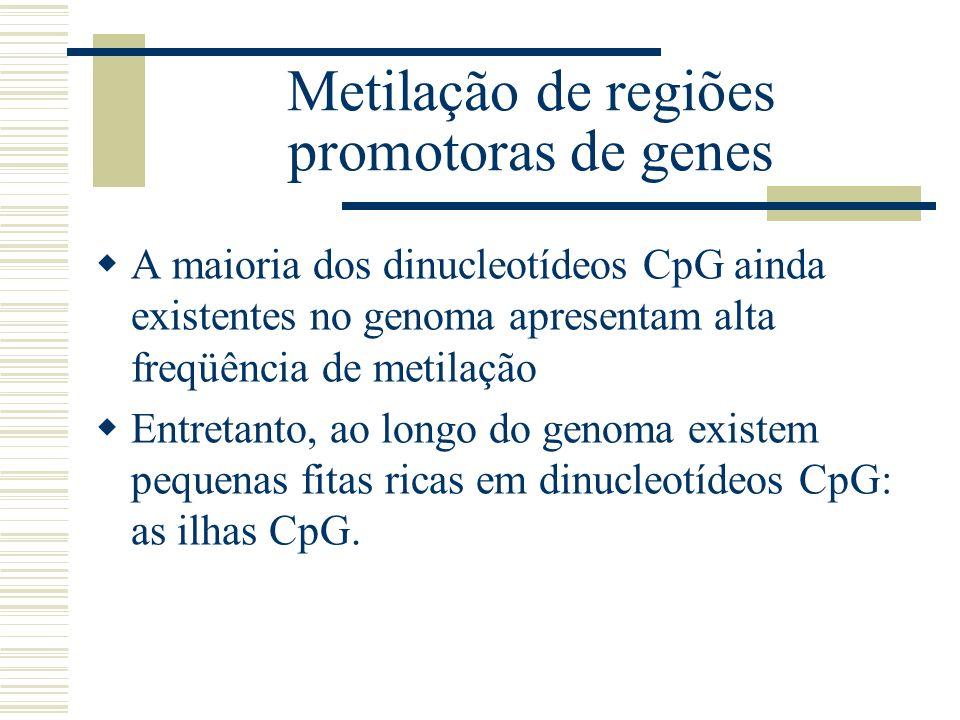 Metilação de regiões promotoras de genes A maioria dos dinucleotídeos CpG ainda existentes no genoma apresentam alta freqüência de metilação Entretant