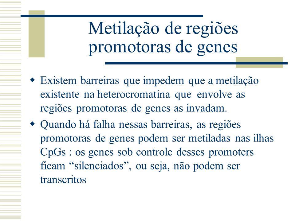 Metilação de regiões promotoras de genes Existem barreiras que impedem que a metilação existente na heterocromatina que envolve as regiões promotoras