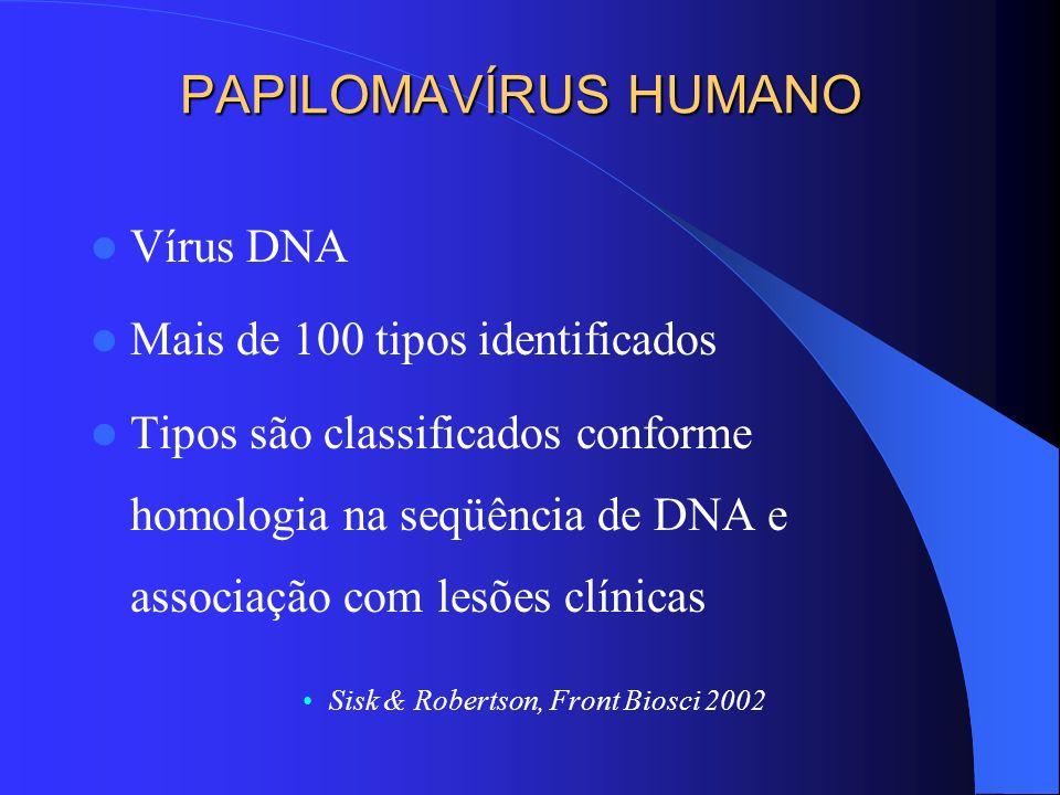 PAPILOMAVÍRUS HUMANO Vírus DNA Mais de 100 tipos identificados Tipos são classificados conforme homologia na seqüência de DNA e associação com lesões