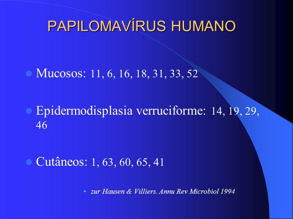 PAPILOMAVÍRUS HUMANO Mucosos: 11, 6, 16, 18, 31, 33, 52 Epidermodisplasia verruciforme: 14, 19, 29, 46 Cutâneos: 1, 63, 60, 65, 41 zur Hausen & Villie