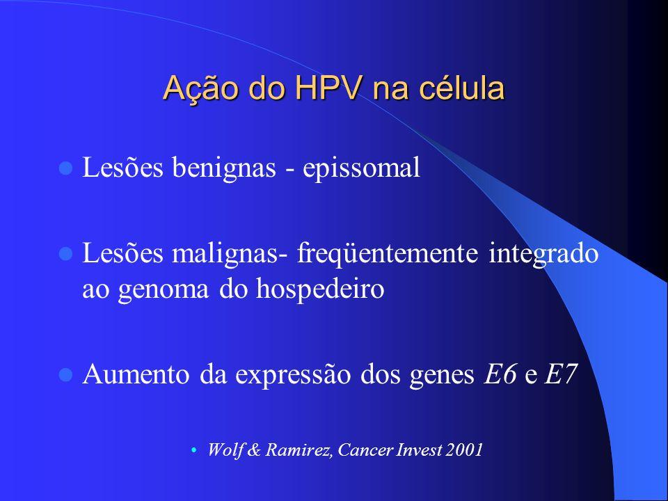 Ação do HPV na célula Lesões benignas - epissomal Lesões malignas- freqüentemente integrado ao genoma do hospedeiro Aumento da expressão dos genes E6