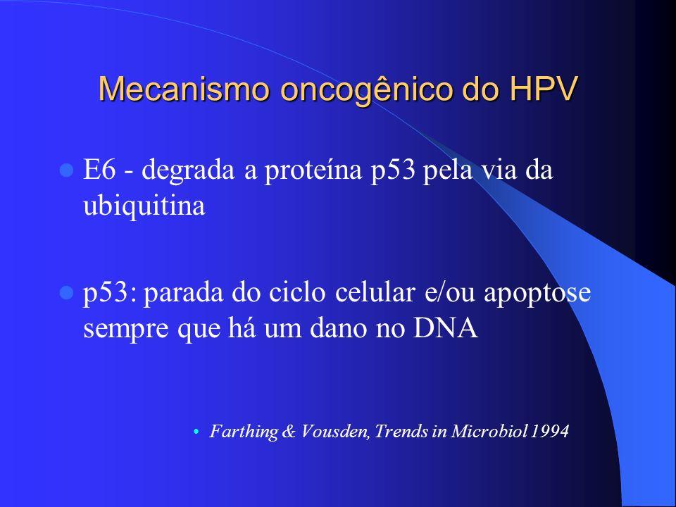 Mecanismo oncogênico do HPV E6 - degrada a proteína p53 pela via da ubiquitina p53: parada do ciclo celular e/ou apoptose sempre que há um dano no DNA