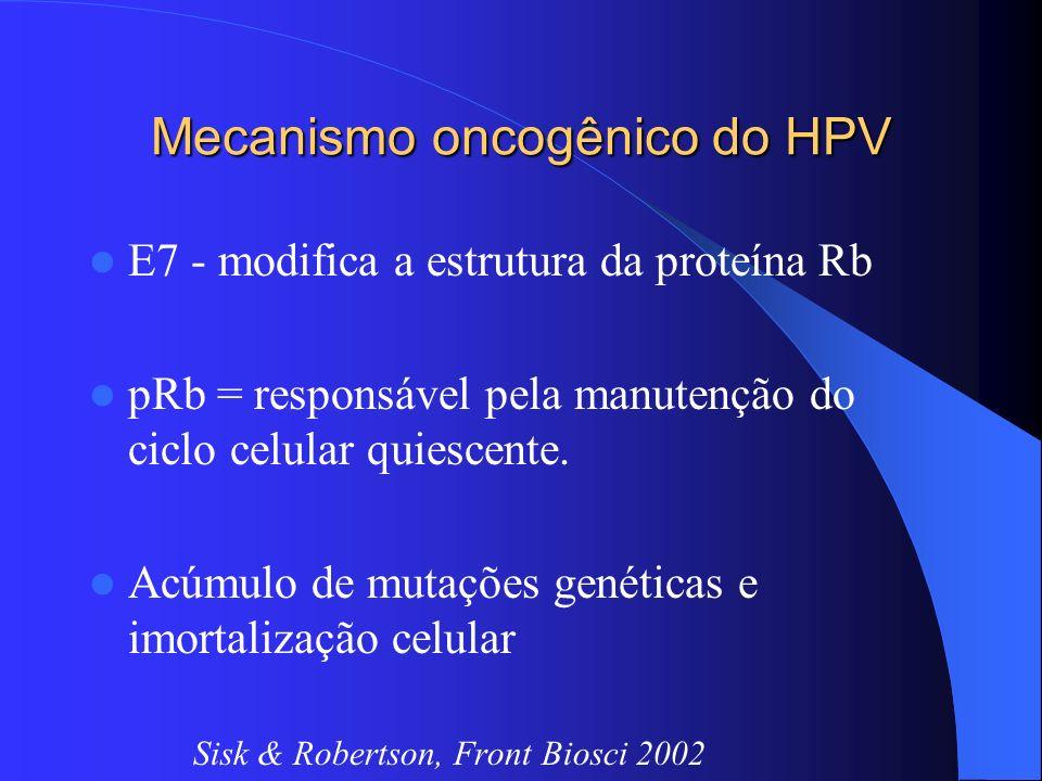 Mecanismo oncogênico do HPV E7 - modifica a estrutura da proteína Rb pRb = responsável pela manutenção do ciclo celular quiescente. Acúmulo de mutaçõe