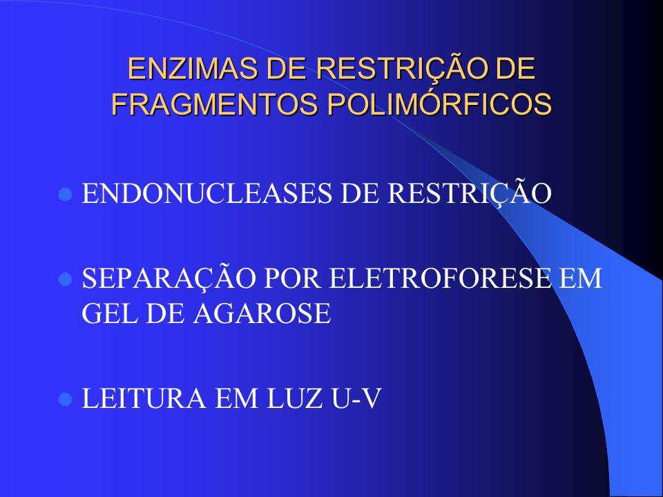 ENZIMAS DE RESTRIÇÃO DE FRAGMENTOS POLIMÓRFICOS ENDONUCLEASES DE RESTRIÇÃO SEPARAÇÃO POR ELETROFORESE EM GEL DE AGAROSE LEITURA EM LUZ U-V
