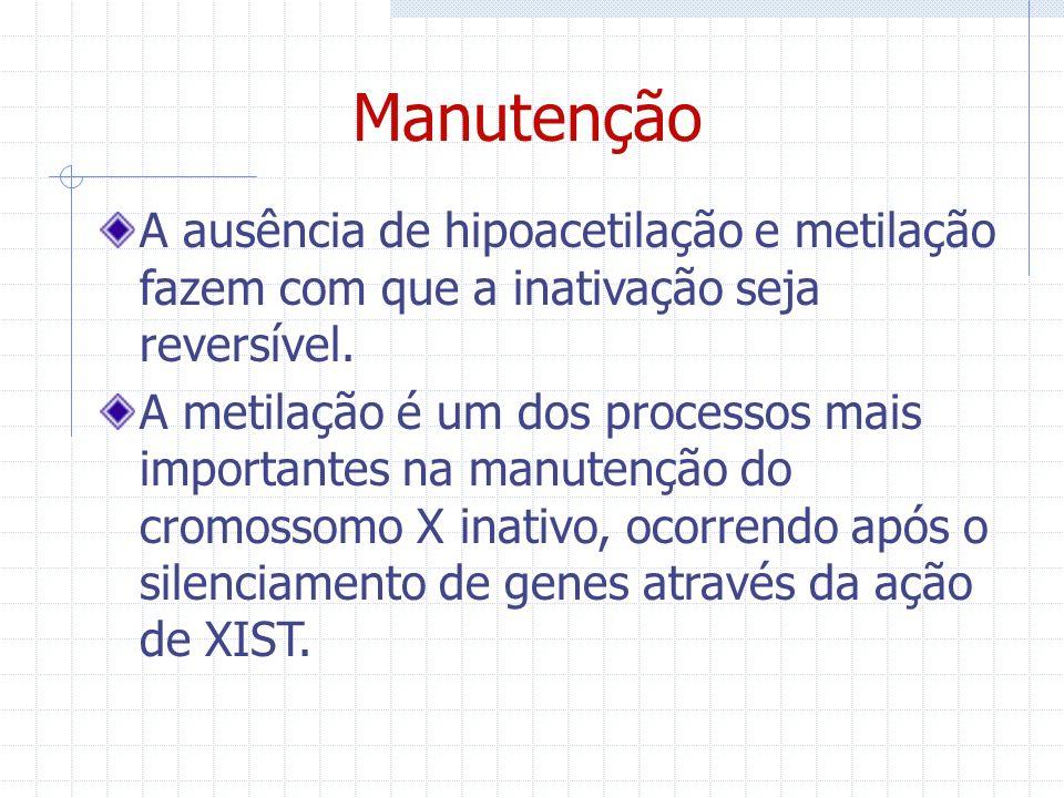Manutenção A ausência de hipoacetilação e metilação fazem com que a inativação seja reversível. A metilação é um dos processos mais importantes na man