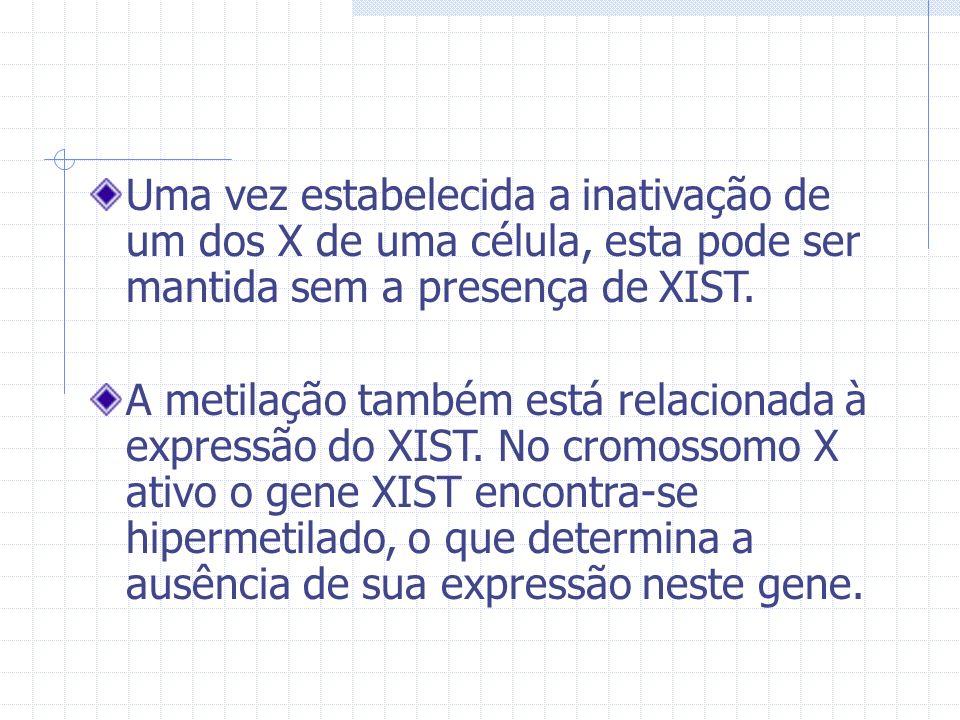 Uma vez estabelecida a inativação de um dos X de uma célula, esta pode ser mantida sem a presença de XIST. A metilação também está relacionada à expre