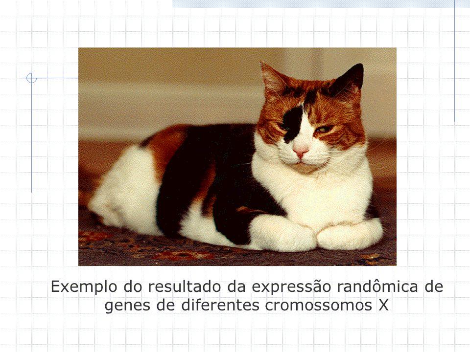 Exemplo do resultado da expressão randômica de genes de diferentes cromossomos X