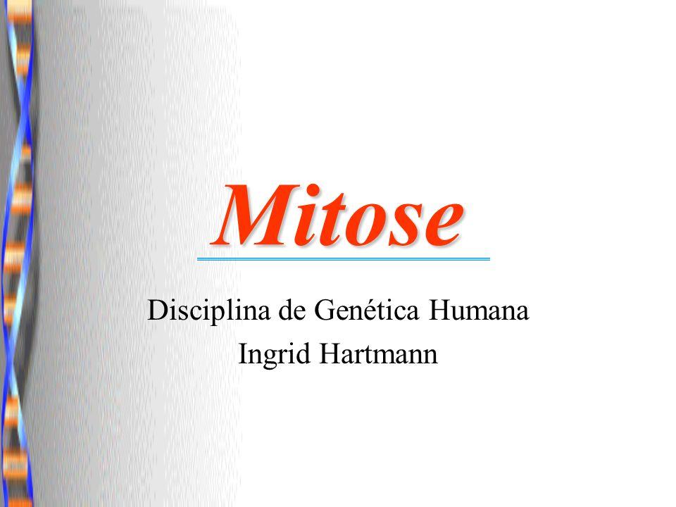Mitose Disciplina de Genética Humana Ingrid Hartmann
