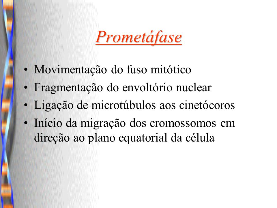 Prometáfase Movimentação do fuso mitótico Fragmentação do envoltório nuclear Ligação de microtúbulos aos cinetócoros Início da migração dos cromossomo