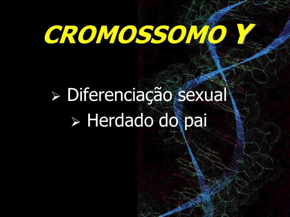 Y CROMOSSOMO Y Diferenciação sexual Herdado do pai