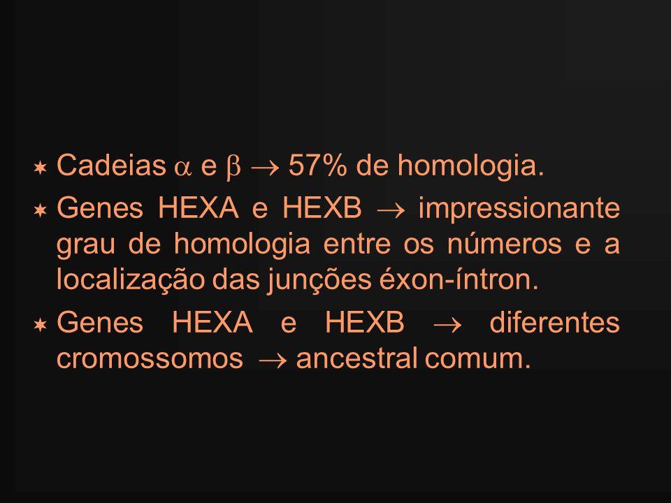 Cadeias e 57% de homologia. Genes HEXA e HEXB impressionante grau de homologia entre os números e a localização das junções éxon-íntron. Genes HEXA e