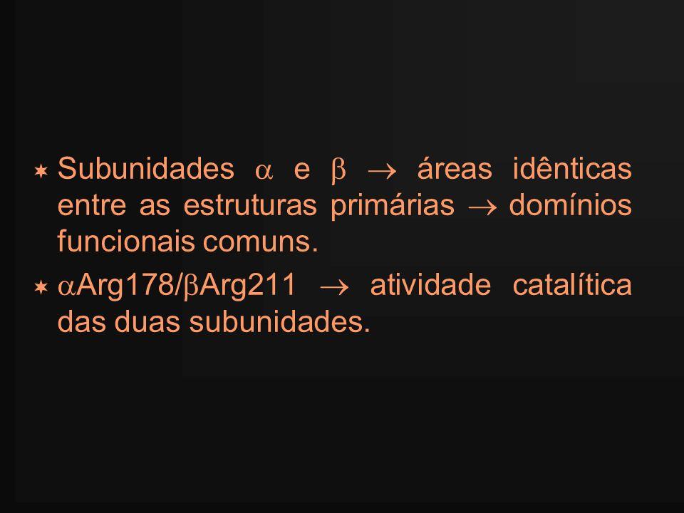 Subunidades e áreas idênticas entre as estruturas primárias domínios funcionais comuns. Arg178/ Arg211 atividade catalítica das duas subunidades.
