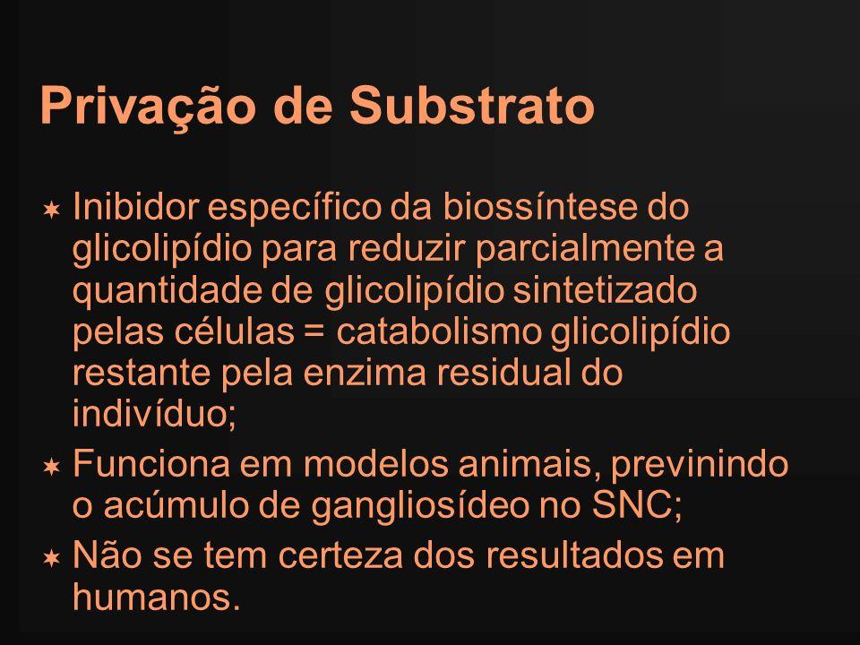 Privação de Substrato Inibidor específico da biossíntese do glicolipídio para reduzir parcialmente a quantidade de glicolipídio sintetizado pelas célu