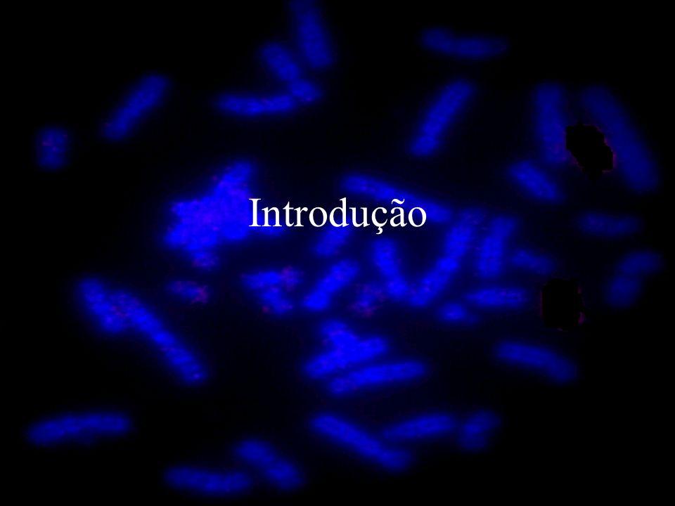 Elastina As regiões hidrofóbicas e os domínios ligantes são codificados por pequenos éxons que são separados por grandes íntrons.