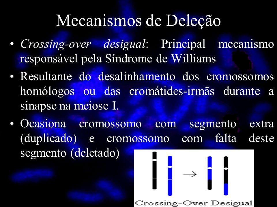 Mecanismos de Deleção Crossing-over desigual: Principal mecanismo responsável pela Síndrome de Williams Resultante do desalinhamento dos cromossomos h