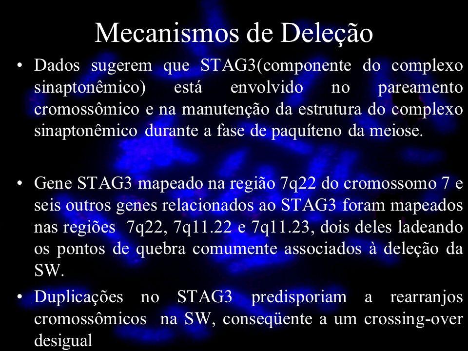 Mecanismos de Deleção Dados sugerem que STAG3(componente do complexo sinaptonêmico) está envolvido no pareamento cromossômico e na manutenção da estru