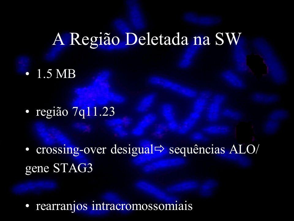 1.5 MB região 7q11.23 crossing-over desigual sequências ALO/ gene STAG3 rearranjos intracromossomiais