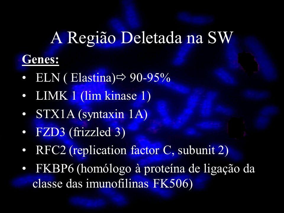 A Região Deletada na SW Genes: ELN ( Elastina) 90-95% LIMK 1 (lim kinase 1) STX1A (syntaxin 1A) FZD3 (frizzled 3) RFC2 (replication factor C, subunit