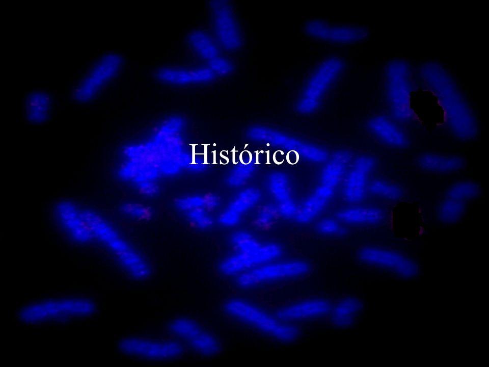 Deleção Perda de segmento cromossômico, resultando em desequilíbrio.