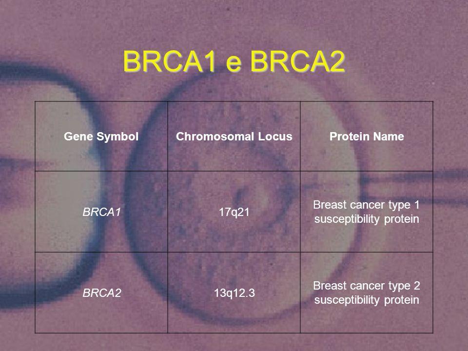 BRCA1 e BRCA2 Gene SymbolChromosomal LocusProtein Name BRCA117q21 Breast cancer type 1 susceptibility protein BRCA213q12.3 Breast cancer type 2 suscep