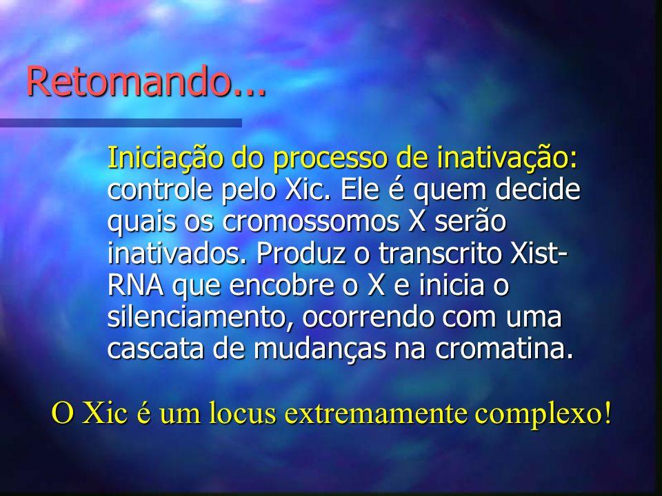 Retomando... Iniciação do processo de inativação: controle pelo Xic. Ele é quem decide quais os cromossomos X serão inativados. Produz o transcrito Xi