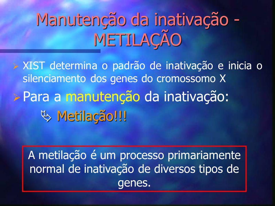 Manutenção da inativação - METILAÇÃO XIST determina o padrão de inativação e inicia o silenciamento dos genes do cromossomo X Para a manutenção da ina