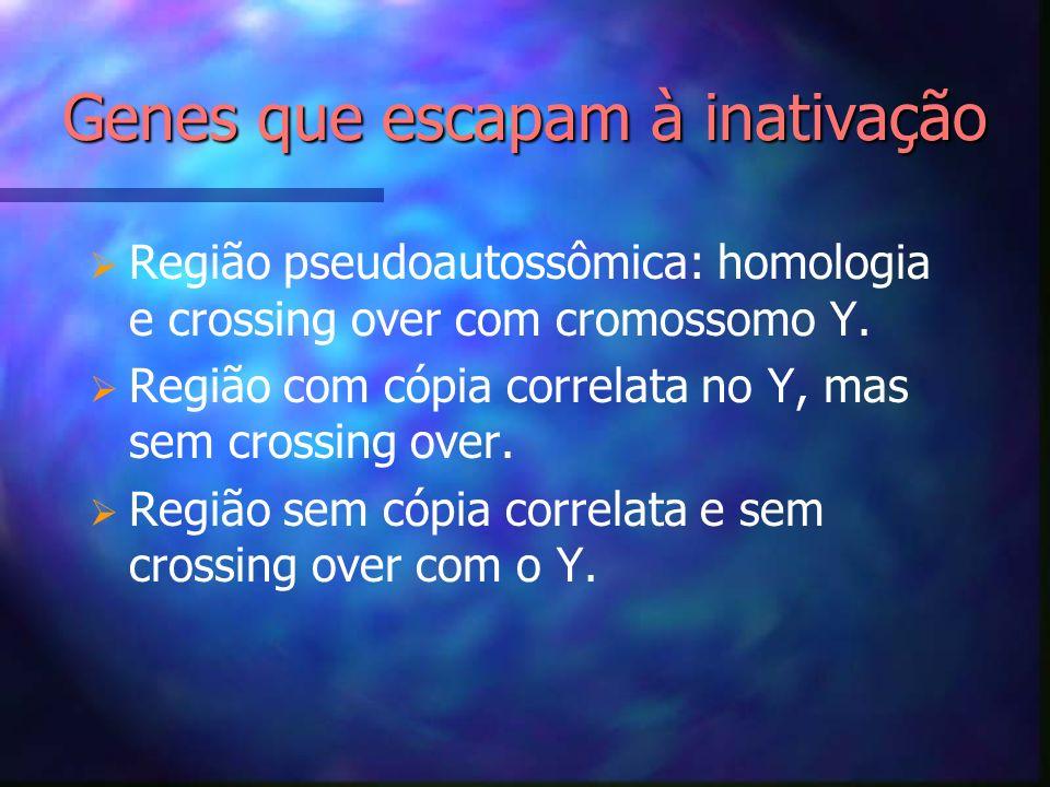 Região pseudoautossômica: homologia e crossing over com cromossomo Y. Região com cópia correlata no Y, mas sem crossing over. Região sem cópia correla