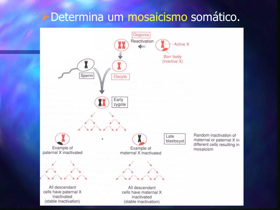 Lyonização negativa: Lyonização negativa: Preconiza a inativação do X normal.