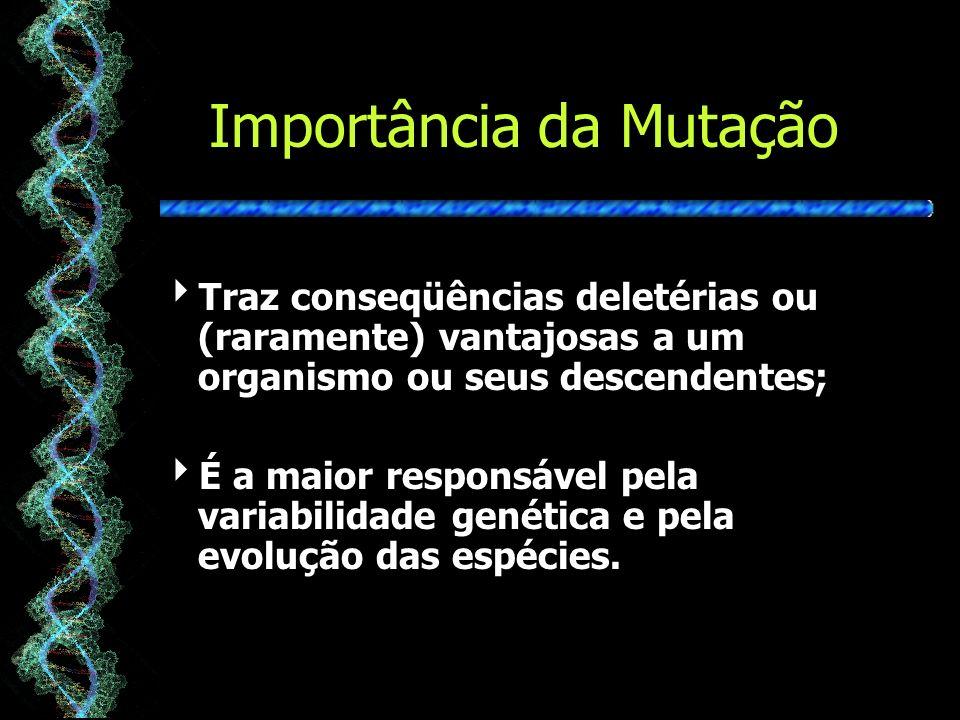 Importância da Mutação Traz conseqüências deletérias ou (raramente) vantajosas a um organismo ou seus descendentes; É a maior responsável pela variabilidade genética e pela evolução das espécies.