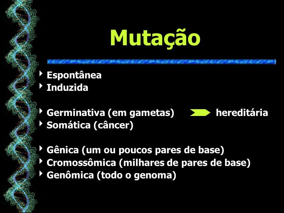 Mutação Espontânea Induzida Germinativa (em gametas) hereditária Somática (câncer) Gênica (um ou poucos pares de base) Cromossômica (milhares de pares de base) Genômica (todo o genoma)