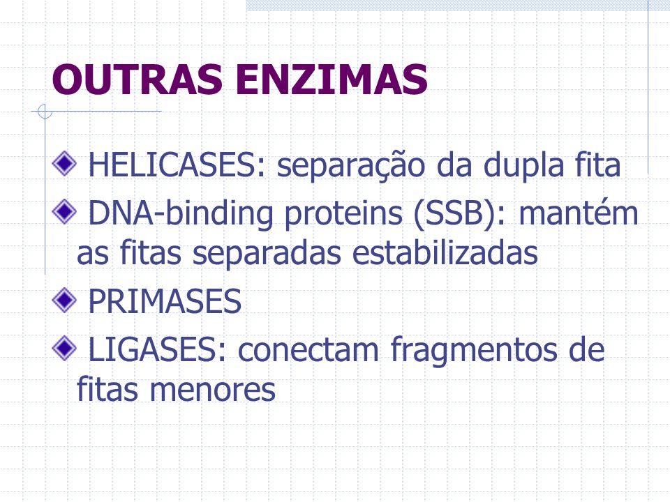 OUTRAS ENZIMAS HELICASES: separação da dupla fita DNA-binding proteins (SSB): mantém as fitas separadas estabilizadas PRIMASES LIGASES: conectam fragm