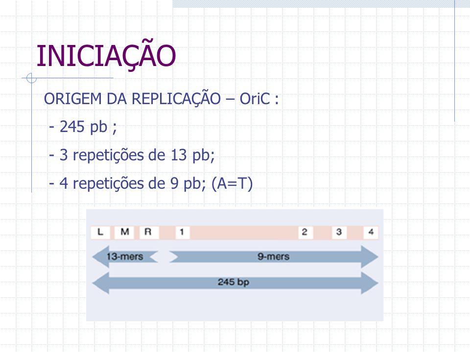 INICIAÇÃO ORIGEM DA REPLICAÇÃO – OriC : - 245 pb ; - 3 repetições de 13 pb; - 4 repetições de 9 pb; (A=T)