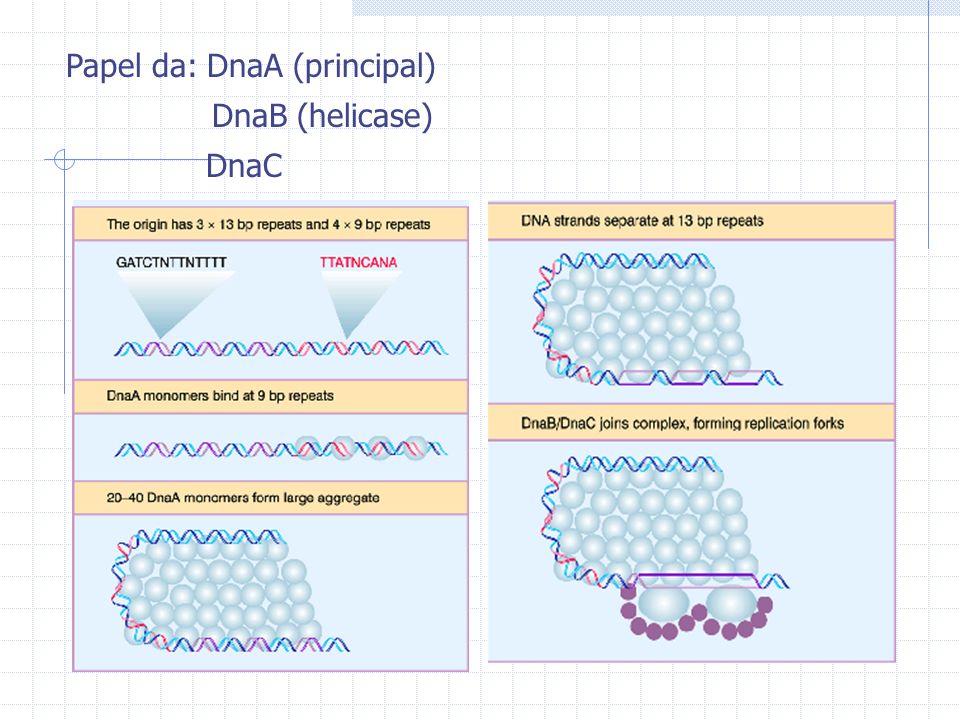 Papel da: DnaA (principal) DnaB (helicase) DnaC
