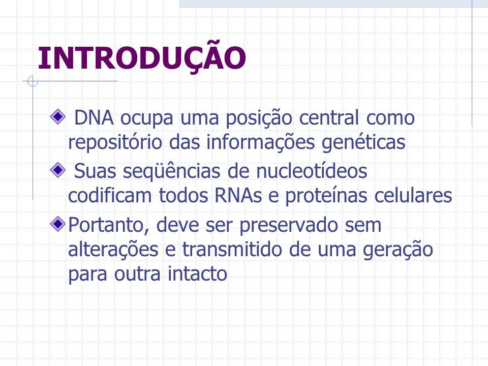 INTRODUÇÃO DNA ocupa uma posição central como repositório das informações genéticas Suas seqüências de nucleotídeos codificam todos RNAs e proteínas c