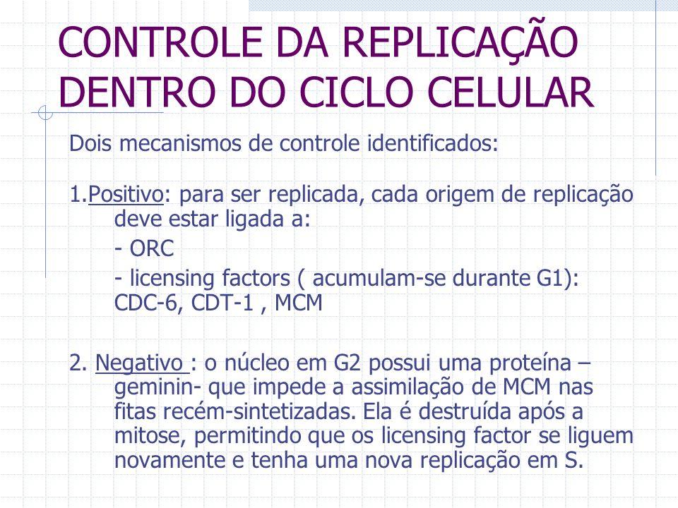 CONTROLE DA REPLICAÇÃO DENTRO DO CICLO CELULAR Dois mecanismos de controle identificados: 1.Positivo: para ser replicada, cada origem de replicação de