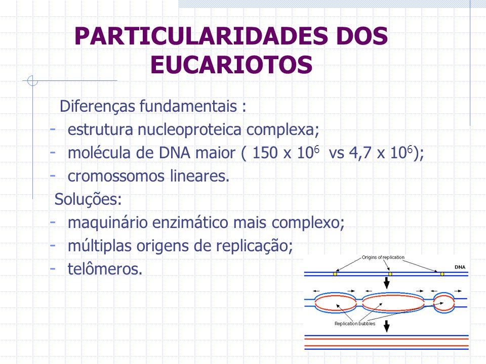 PARTICULARIDADES DOS EUCARIOTOS Diferenças fundamentais : - estrutura nucleoproteica complexa; - molécula de DNA maior ( 150 x 10 6 vs 4,7 x 10 6 ); -