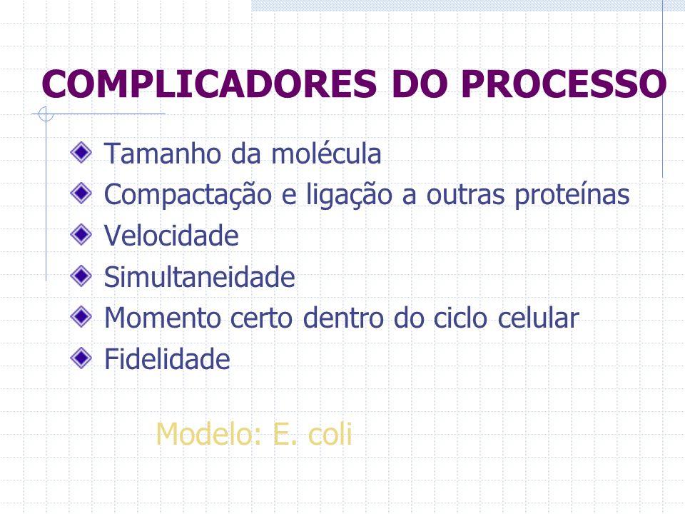 COMPLICADORES DO PROCESSO Tamanho da molécula Compactação e ligação a outras proteínas Velocidade Simultaneidade Momento certo dentro do ciclo celular