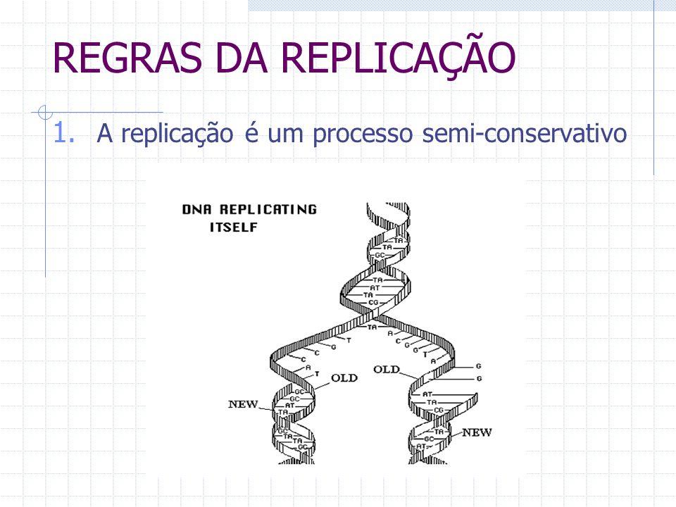 REGRAS DA REPLICAÇÃO 1. A replicação é um processo semi-conservativo