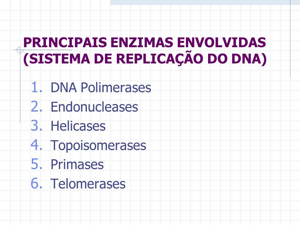 PRINCIPAIS ENZIMAS ENVOLVIDAS (SISTEMA DE REPLICAÇÃO DO DNA) 1. DNA Polimerases 2. Endonucleases 3. Helicases 4. Topoisomerases 5. Primases 6. Telomer