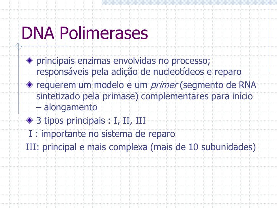 DNA Polimerases principais enzimas envolvidas no processo; responsáveis pela adição de nucleotídeos e reparo requerem um modelo e um primer (segmento