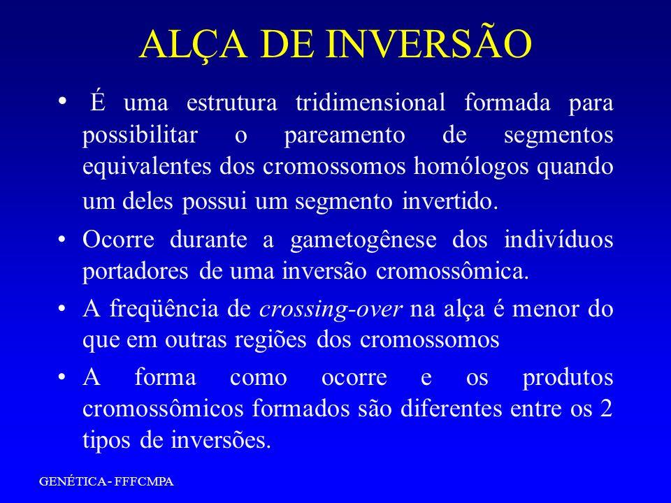 ALÇA DE INVERSÃO É uma estrutura tridimensional formada para possibilitar o pareamento de segmentos equivalentes dos cromossomos homólogos quando um d