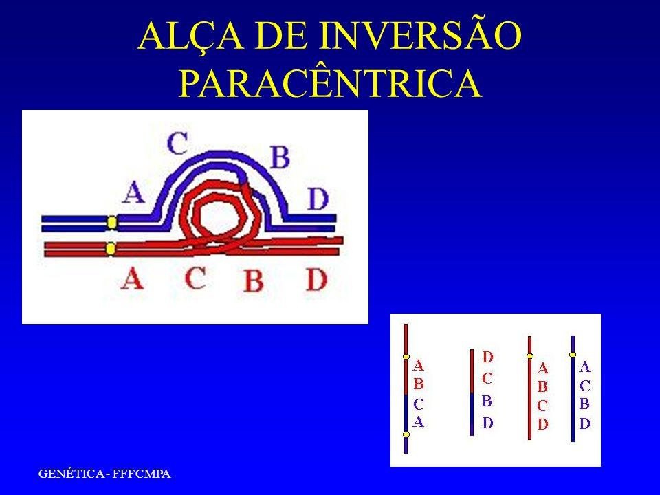GENÉTICA - FFFCMPA ALÇA DE INVERSÃO PARACÊNTRICA