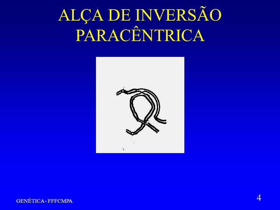 GENÉTICA - FFFCMPA 4 ALÇA DE INVERSÃO PARACÊNTRICA