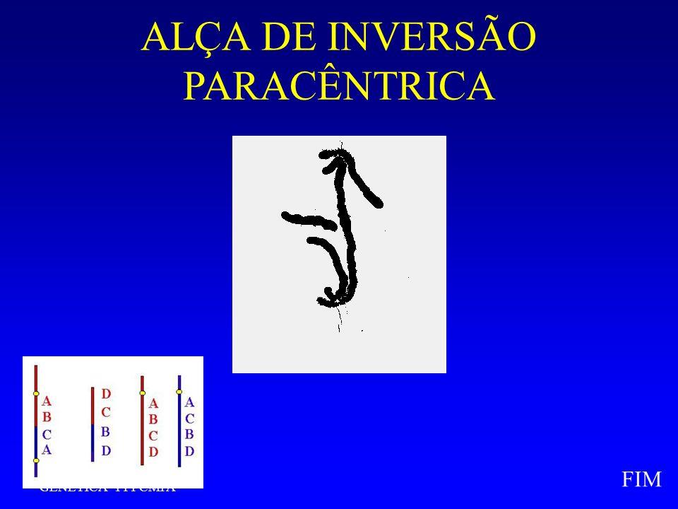 GENÉTICA - FFFCMPA FIM ALÇA DE INVERSÃO PARACÊNTRICA