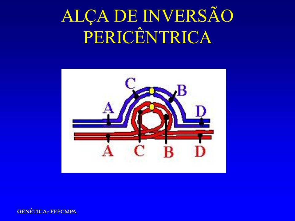 GENÉTICA - FFFCMPA ALÇA DE INVERSÃO PERICÊNTRICA